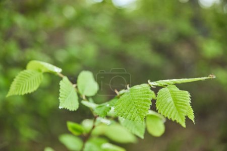 Foto de Selective focus of green leaves on tree in forest - Imagen libre de derechos