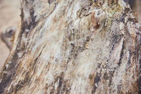 Photo for Close up view of wooden textured tree trunk with sand - Royalty Free Image