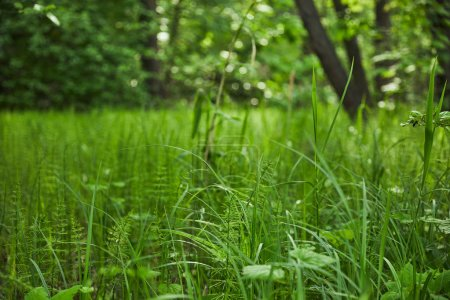 Photo for Summer season with green grass on forest background - Royalty Free Image
