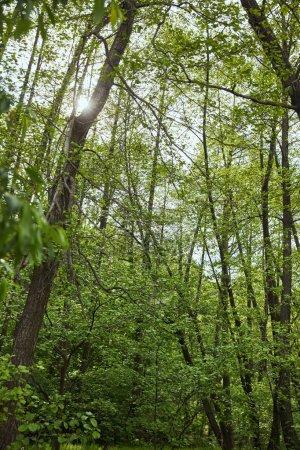 Photo pour Vue d'angle bas de forêt verte avec des arbres de feuilles - image libre de droit