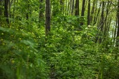 """Постер, картина, фотообои """"Green plants, trees and grass in summer forest"""""""