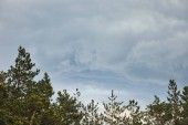 "Постер, картина, фотообои ""Aerial view of green pine forest under blue sky with clouds"""