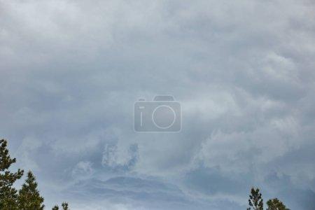 Photo pour Ciel couvert avec des nuages au-dessus des dessus verts des pins - image libre de droit