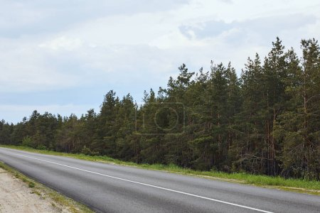pine forest near highway on white sky background