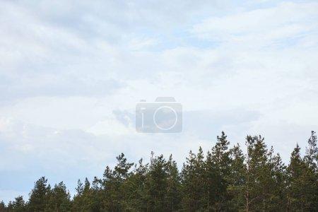 Foto de Low angle view of white sky upon tops of trees - Imagen libre de derechos
