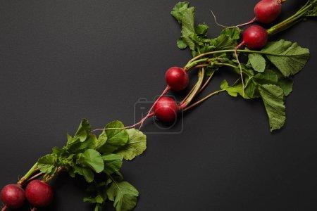 Foto de Sabroso y nutritivo rábano con hojas verdes sobre fondo negro - Imagen libre de derechos
