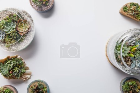 Photo for Top view of green natural succulents in flowerpots on white background - Royalty Free Image