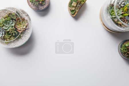 top view of green succulents in glass flowerpots on white background