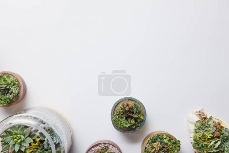 Photo for Top view of green succulents in various flowerpots on white background with copy space - Royalty Free Image