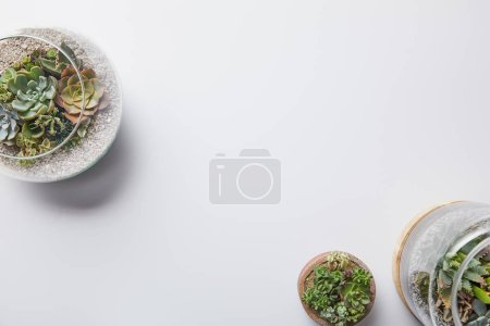 Photo for Top view of green succulents in glass flowerpots on white background - Royalty Free Image