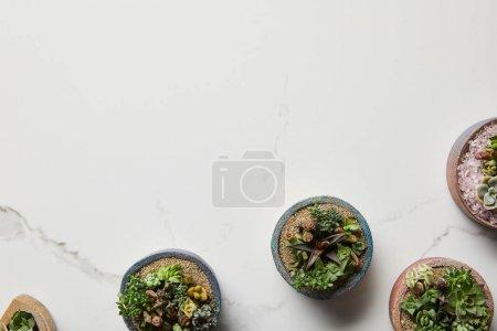 Photo pour Vue supérieure des succulentes vertes dans les pots de fleurs sur le fond texturé de marbre - image libre de droit