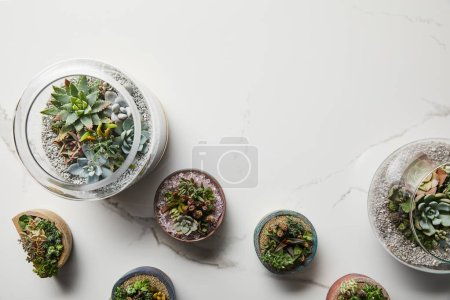 Photo for Top view of exotic green succulents in flowerpots on textured marble background - Royalty Free Image