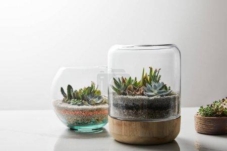 Photo pour Succulentes vertes sous le verre dans des pots de fleur sur la table de marbre sur le fond blanc - image libre de droit