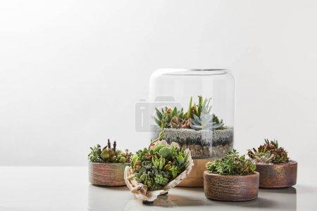 Foto de Verdes suculentas exóticas bajo el vidrio en macetas sobre mesa de mármol sobre fondo blanco - Imagen libre de derechos