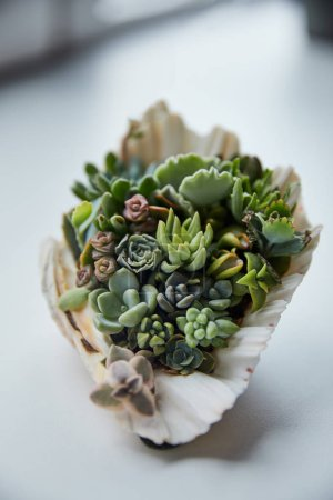 close up view of green succulents in decorative seashell