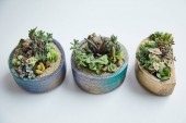 "Постер, картина, фотообои ""tropical green succulents in small flowerpots on white background"""