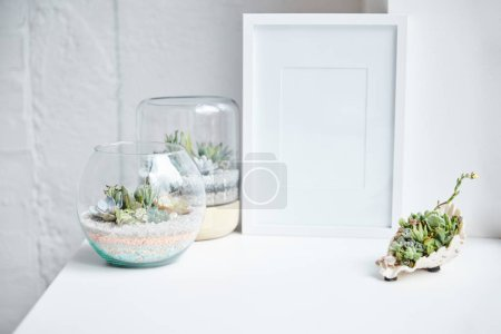 Photo for Green succulents in flowerpots and seashell near empty photo frame on white surface, home decor - Royalty Free Image