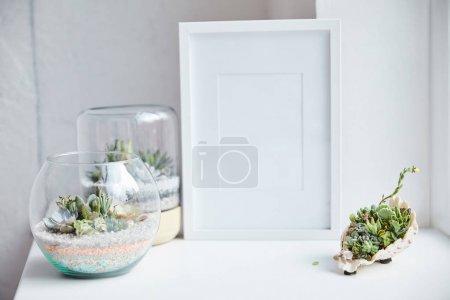 Photo pour Foyer sélectif des succulents verts dans les pots de fleur et le coquillage près du cadre de photo vide sur la surface blanche, décor à la maison - image libre de droit
