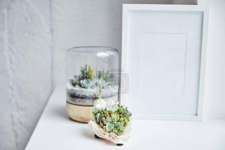 Photo pour Foyer sélectif des succulents verts dans le pot de fleur et le coquillage près du cadre de photo vide sur la surface blanche, décor à la maison - image libre de droit