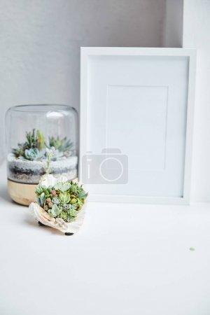 Foto de Green succulents in flowerpot and seashell near empty photo frame on white surface, home decor - Imagen libre de derechos