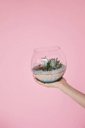Photo for Cropped view of woman holding glass aquarium with green succulents isolated on pink - Royalty Free Image