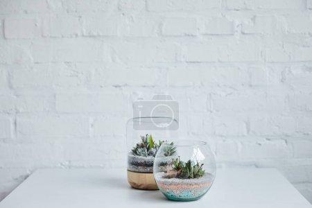 Foto de Decorative tropical succulents in glass flowerpots on white table near brick wall - Imagen libre de derechos