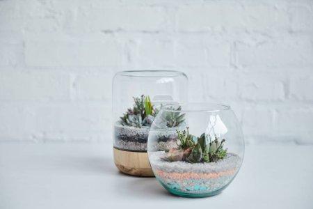 Foto de Suculentas exóticas decorativas en macetas de vidrio en la mesa blanca cerca de la pared de ladrillo - Imagen libre de derechos
