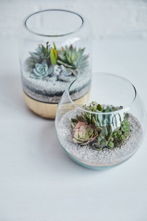 Photo for Close up view of decorative exotic succulents in glass flowerpots on white table - Royalty Free Image