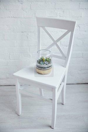 Photo pour Succulents exotiques décoratifs sous couverture de verre en pot de fleurs sur chaise blanche - image libre de droit