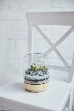 Foto de Suculentas tropicales decorativas bajo cubierta de vidrio en maceta en silla blanca - Imagen libre de derechos