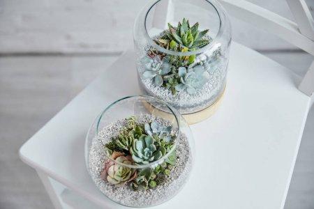 Photo pour Vue de dessus des succulents exotiques décoratifs dans des pots de fleurs en verre sur chaise blanche - image libre de droit