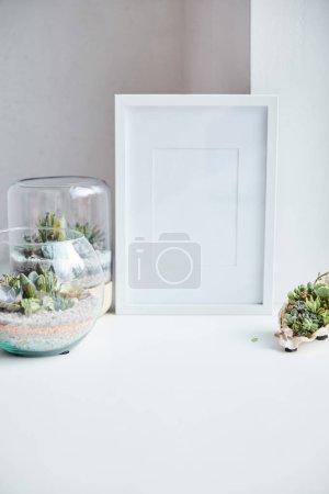 Photo pour Succulentes vertes dans les pots de fleur et le coquillage près du cadre de photo vide sur la surface blanche, décor à la maison - image libre de droit