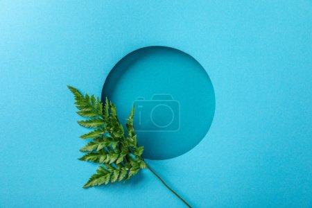 Photo pour Feuille verte de fougère au trou rond sur le papier bleu - image libre de droit