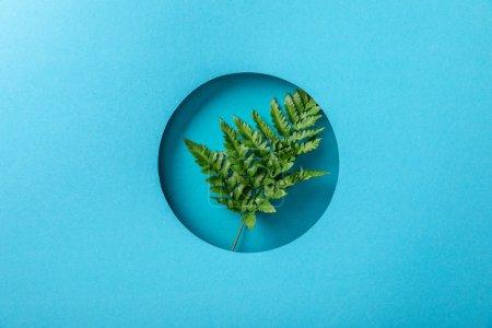 Photo pour Feuille verte de fougère dans le trou rond sur le papier bleu - image libre de droit