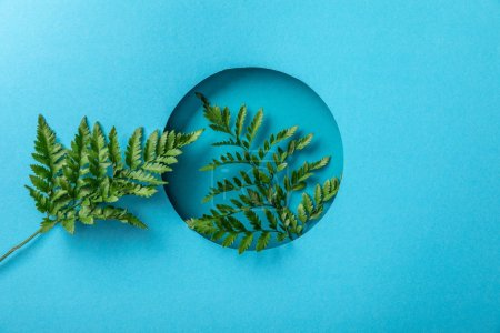Photo for Green fern leaves in round hole on blue paper - Royalty Free Image