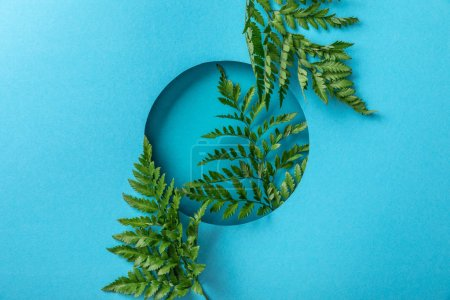 Photo for Decorative green fern leaves in round hole on blue paper - Royalty Free Image