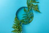 "Постер, картина, фотообои ""decorative green fern leaves in round hole on blue paper """