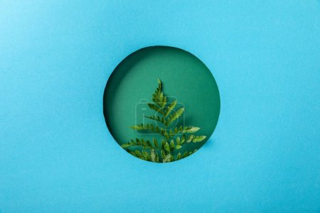 Photo for Fresh fern leaf in round hole on blue paper - Royalty Free Image