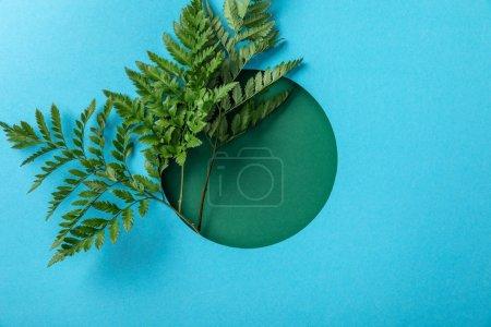 Photo pour Feuilles décoratives de fougère dans le trou rond sur le papier bleu - image libre de droit