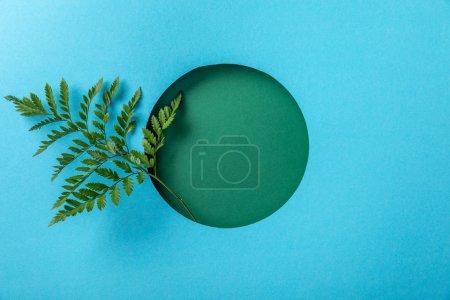 Photo pour Feuille verte de fougère dans le trou rond sur le papier bleu avec l'espace de copie - image libre de droit