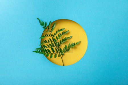 Photo for Green fern leaf in yellow round hole on blue paper - Royalty Free Image