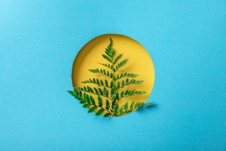Photo pour Fond géométrique avec la feuille de fougère dans le trou rond jaune sur le papier bleu - image libre de droit