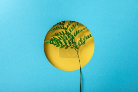 Photo for Geometric background with fern leaf in yellow round hole on blue paper - Royalty Free Image