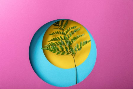 Photo for Green fern leaf on colorful paper background - Royalty Free Image
