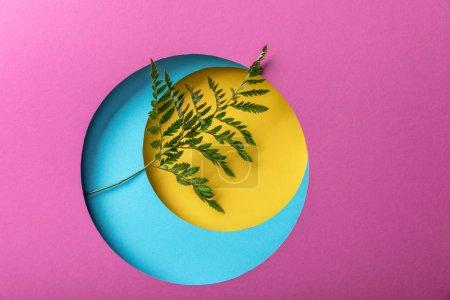 Photo pour Feuille verte de fougère sur le fond coloré de papier - image libre de droit