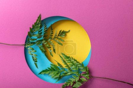 Foto de Hojas de helecho decorativo verde sobre fondo de papel colorido - Imagen libre de derechos