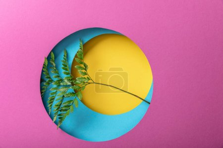 Photo for Green fern leaf on geometric colorful paper background - Royalty Free Image