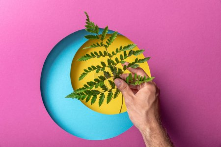 Photo for Cropped view of make hand holding fern leaf on colorful paper with circles - Royalty Free Image
