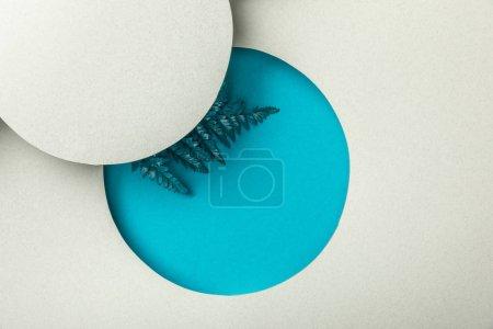 Foto de Hoja de helecho azul en agujero geométrico redondo en papel blanco - Imagen libre de derechos