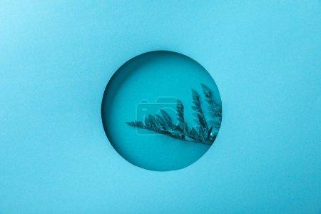 Photo pour Feuille bleue de fougère dans le trou rond sur le papier bleu - image libre de droit
